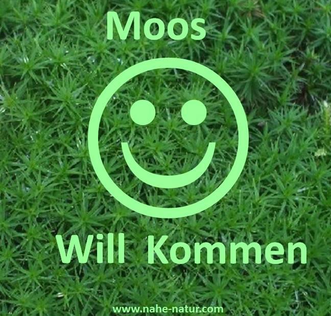 Lieblings Nahe der Natur - Moosgarten #ZF_79